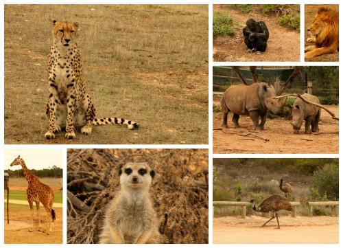 2014-02-21 Monarto Zoo ja Bel Air