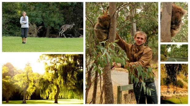 2014-02-21 Monarto Zoo ja Bel Air1